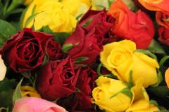 Rosen für die neuen 5er